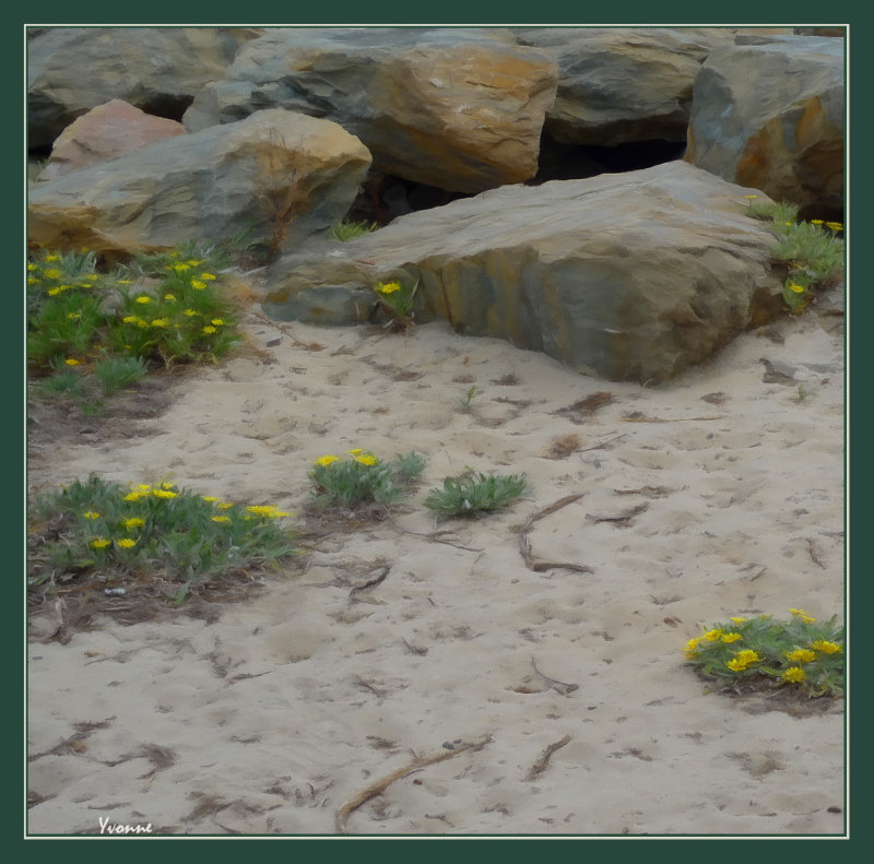 Daisies in the sand