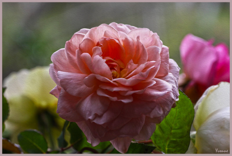 A posy of roses