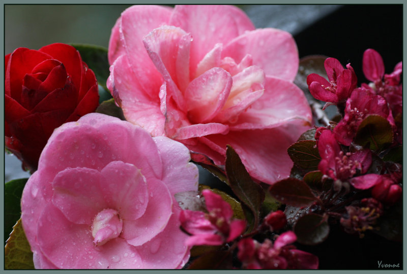 Camellia blooms and some crab apple blossom