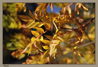 Ash trees turning gold