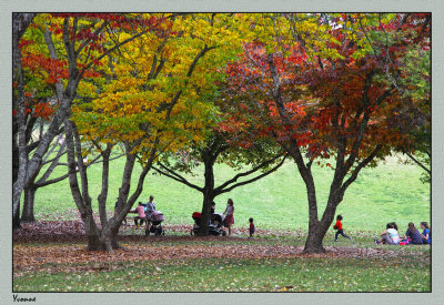 More picnickers under the trees