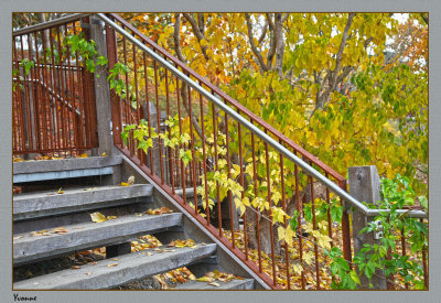 Coloured leaves and steps