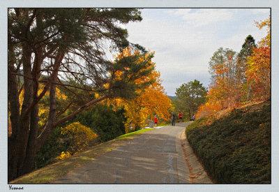 Pathway colour