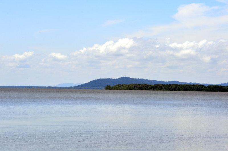 Mangrove Estuary