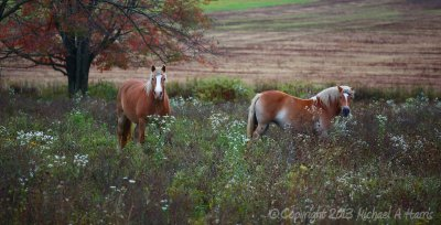 Horses on the Line