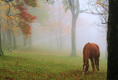 Horse A midst the Fog