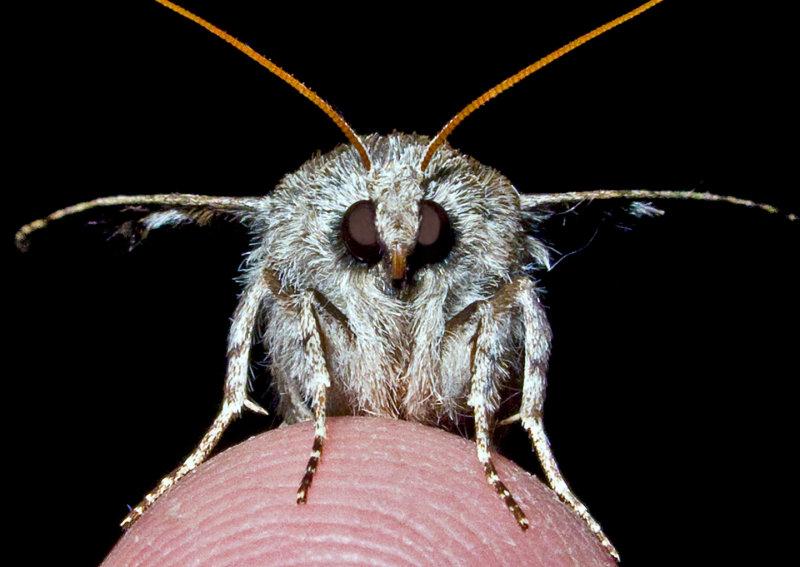 Moth-2014-5