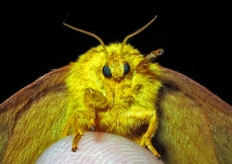 Moth 2014 - 2