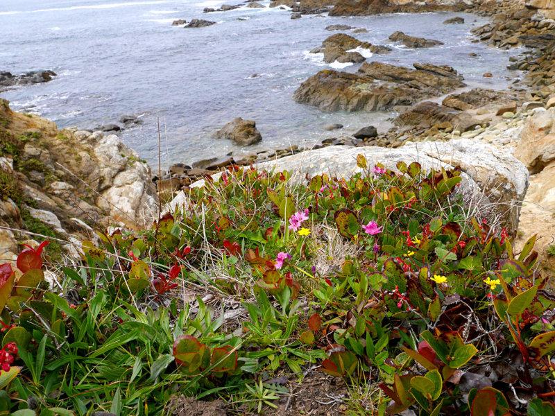 Flowers on the Bluff 2.jpg