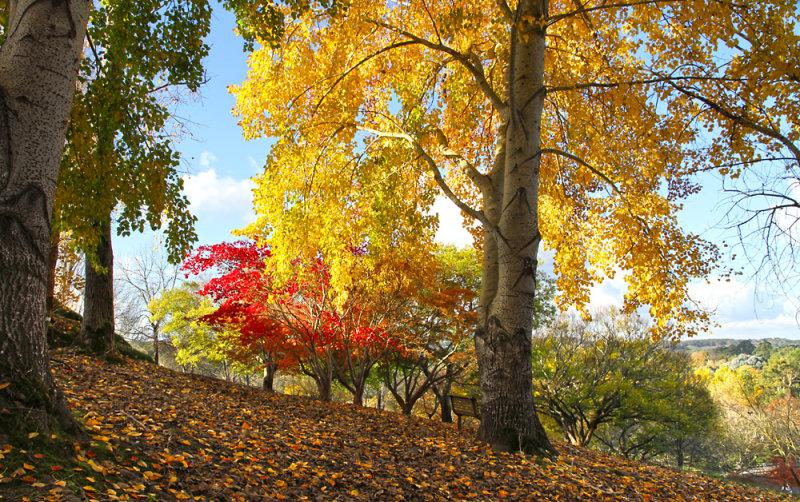 Mt Lofty Botanic Garden