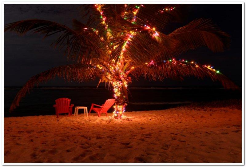 Turtle Nest Inn Christmas Tree