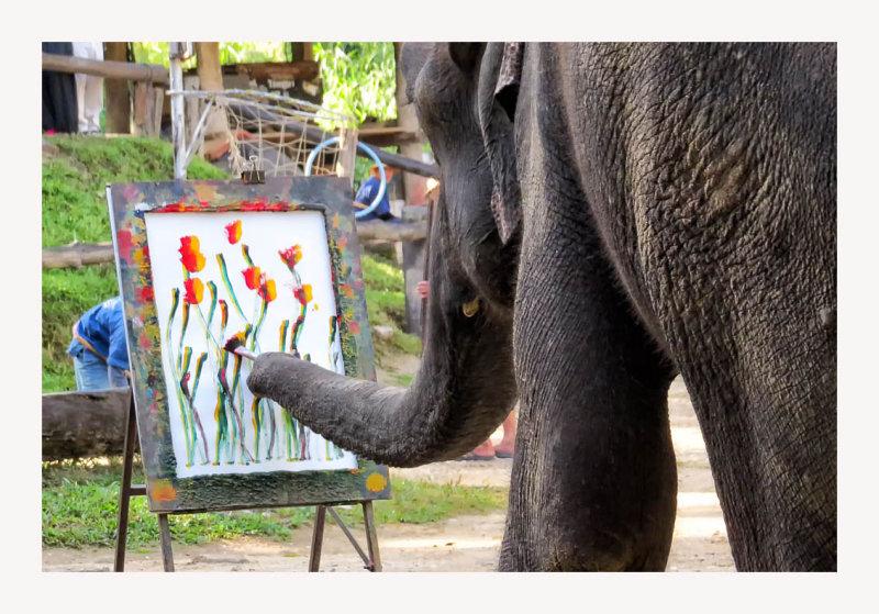 Maesa Elephant Camp 11