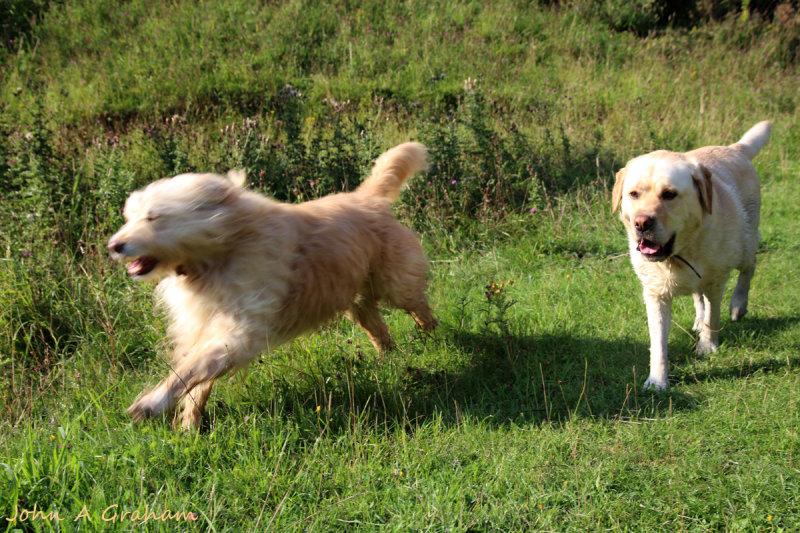 Ozzy running rings around Sam
