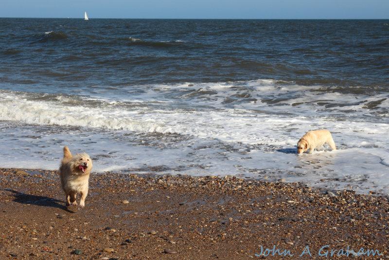 Sam tries to empty the North Sea