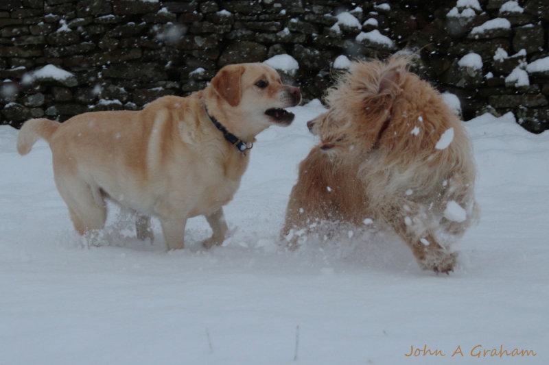 Kicking up the snow