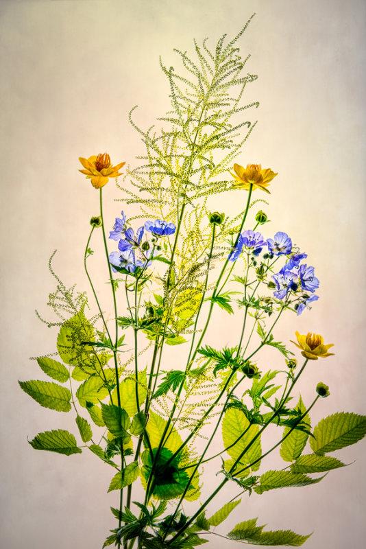 Delicate June flowers