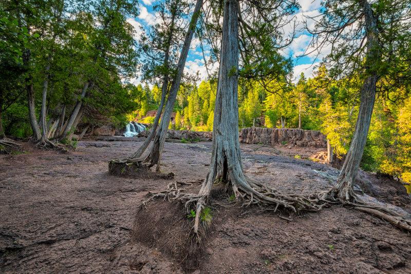 Trees at Gooseberry Falls