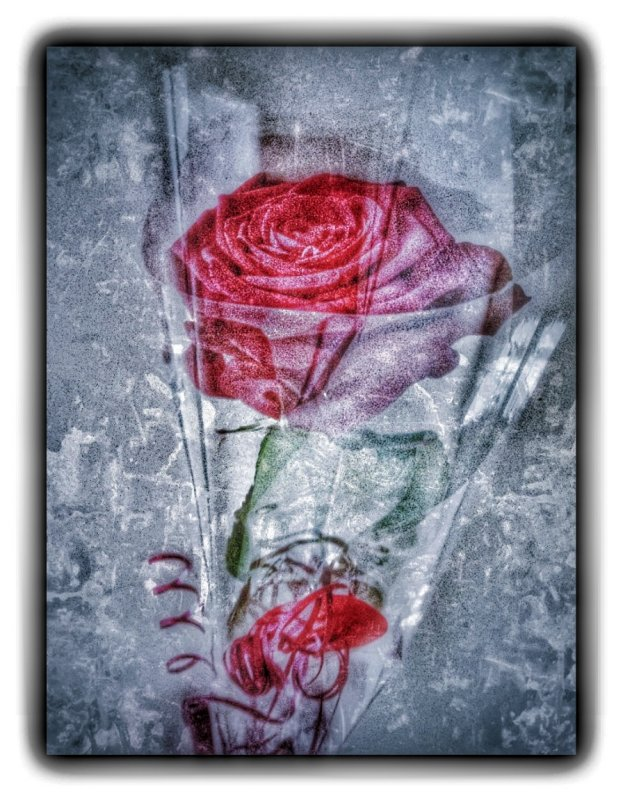 Grungy red rose...