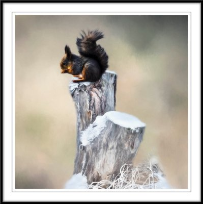 Cute Squirrel....