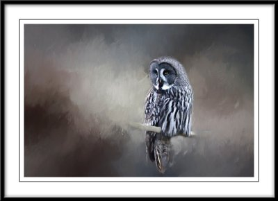 Great Grey Owl...