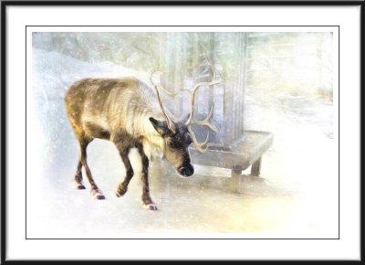 Deer....
