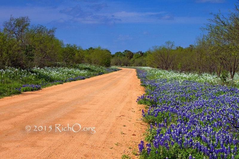 Road To Wildflower Heaven