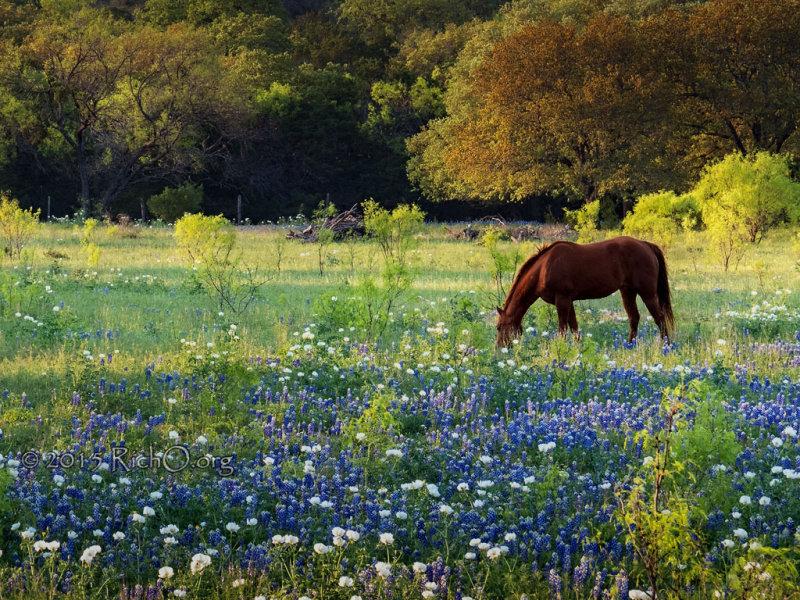 Wildflower Horse