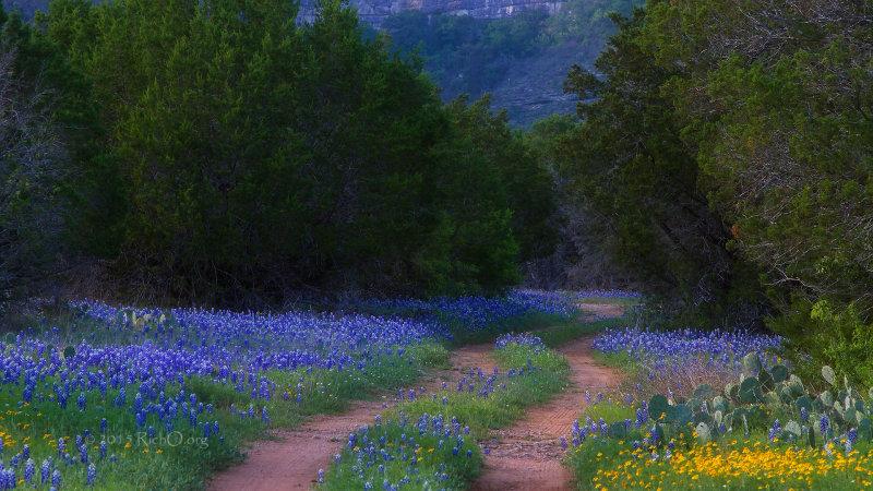 Road To Bluebonnet Canyon HD