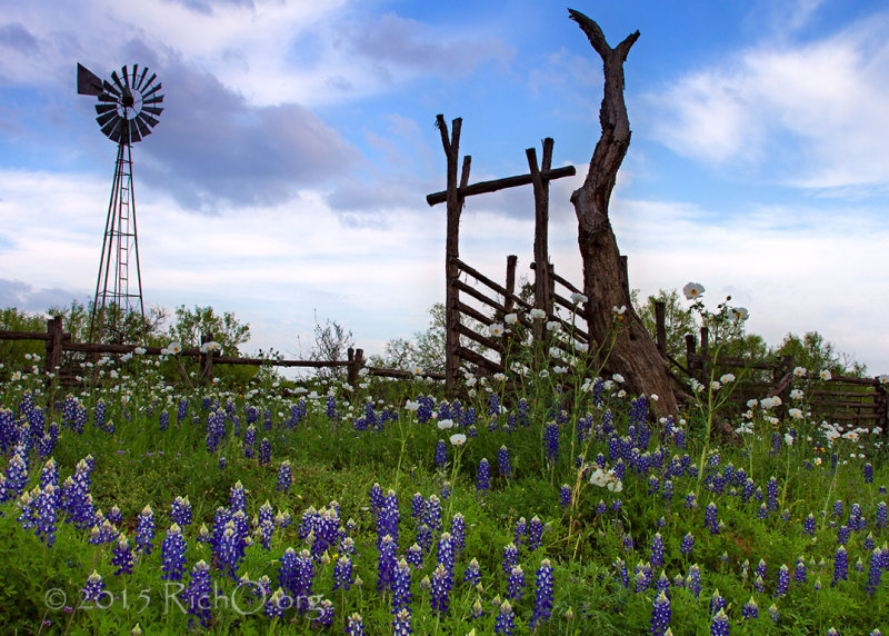 Bluebonnet Windmill