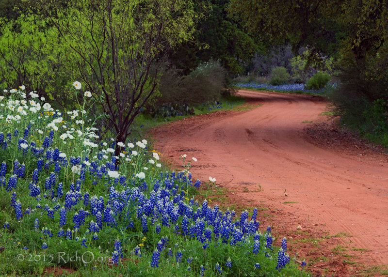 Road To More Bluebonnets