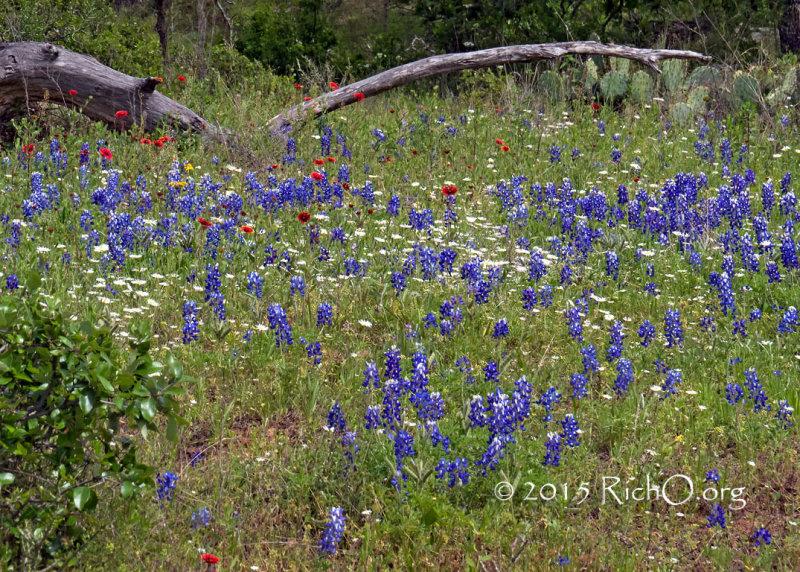 Wildflower Glen