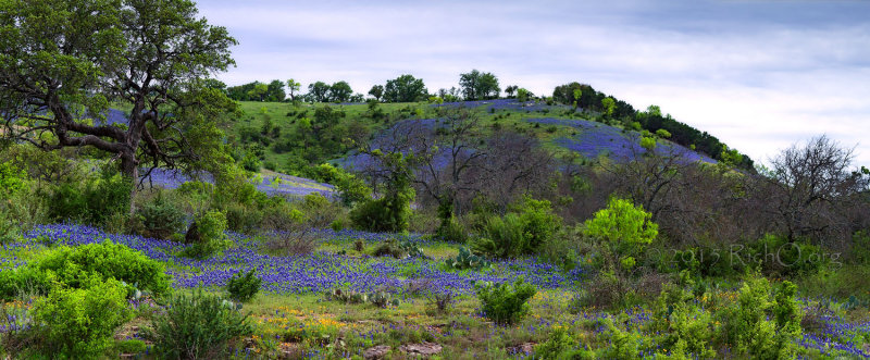 Bluebonnet Hill Pano - Earth Day the Texas Way!