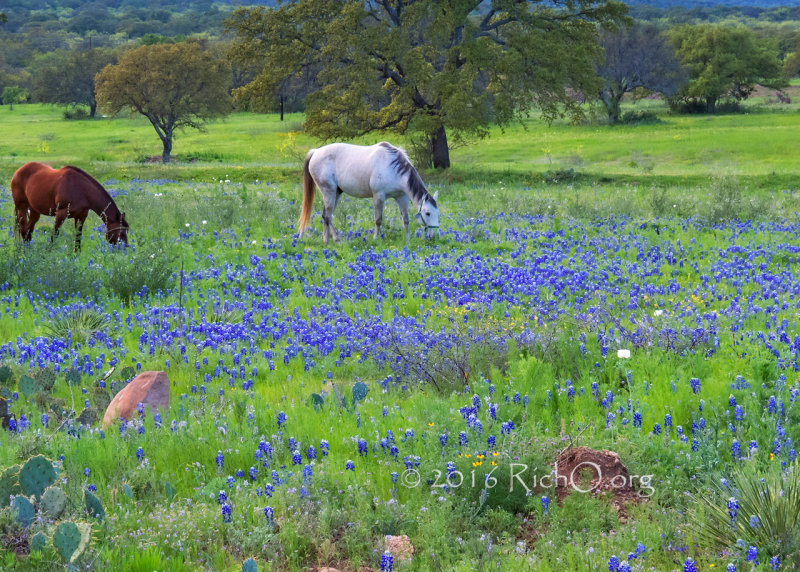 Evening Meal in the Wildflowers