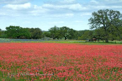 Paintbrush Field