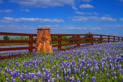 Bluebonnet Fence