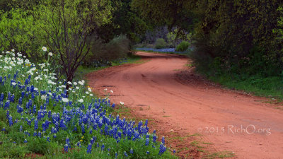 Road To More Bluebonnets-HD720