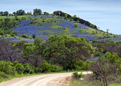 Bluebonnet Hill