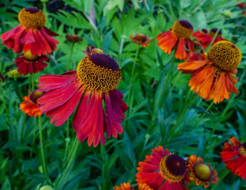 Oak_Bay_Garden-9.jpg
