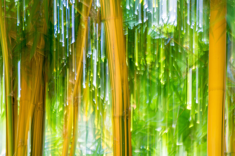 Bamboo Illusion