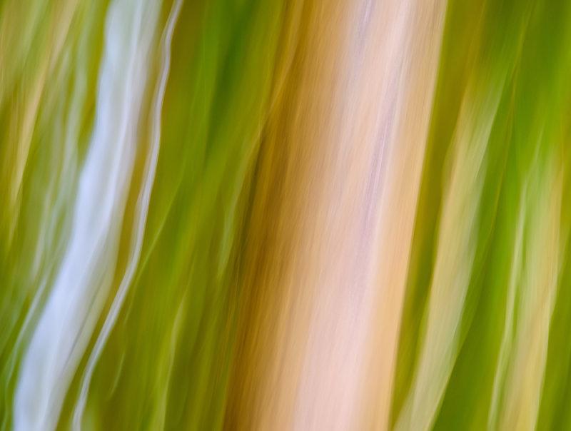 Bamboo Distortion II