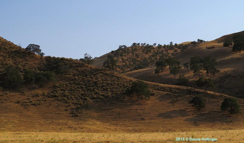 Golden California Hills