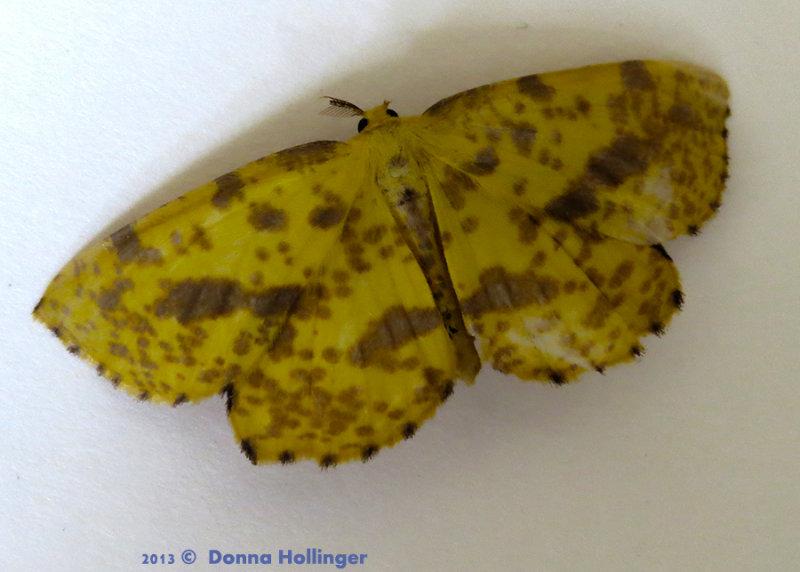 900.eacles.moth.2754.jpg