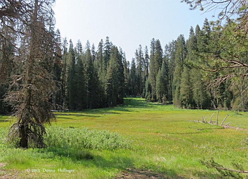 Toulumn Meadow