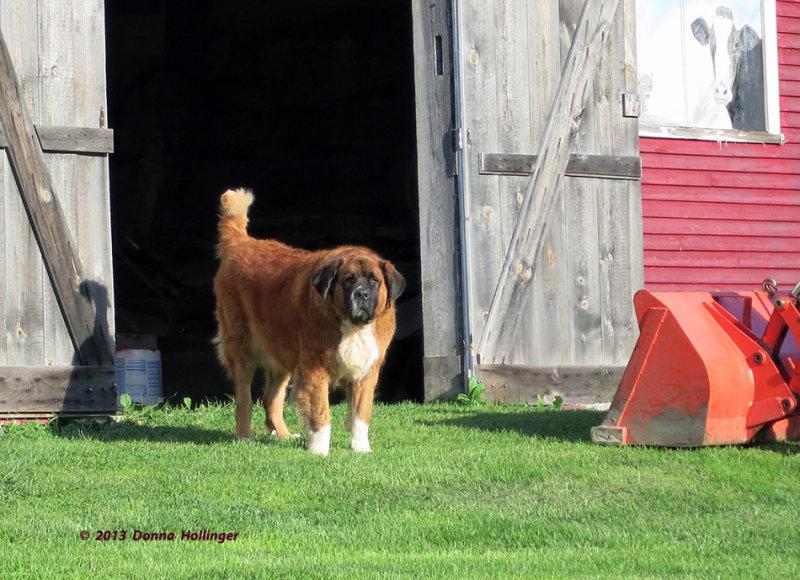 Chrissys Dog