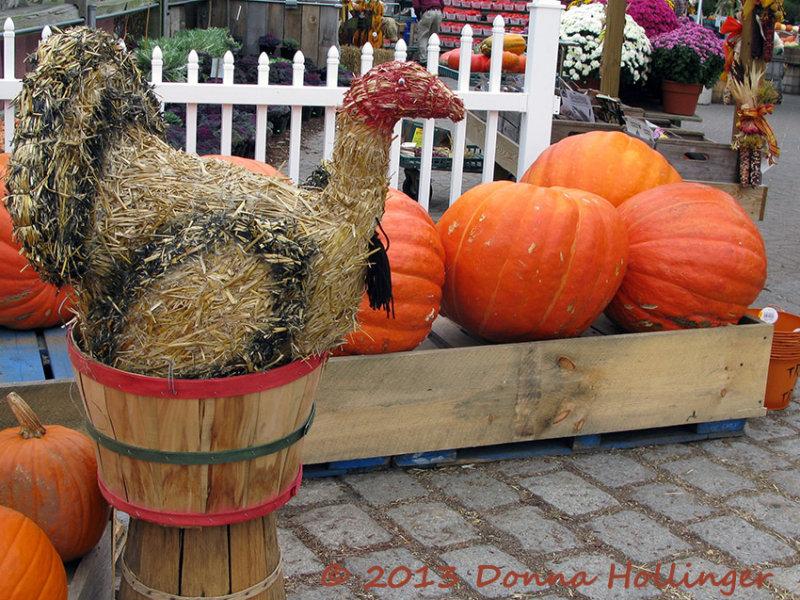 StrawTurkey with Pumpkins
