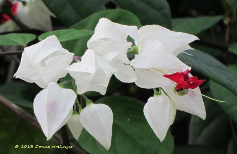 Butterfly Garden (Mariposa) at Sacha Lodge