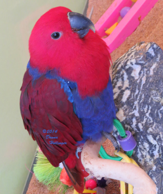 Something About Parrots!