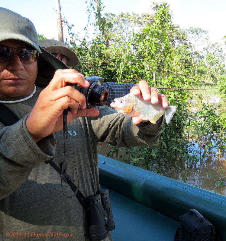 Victor and The Piranha