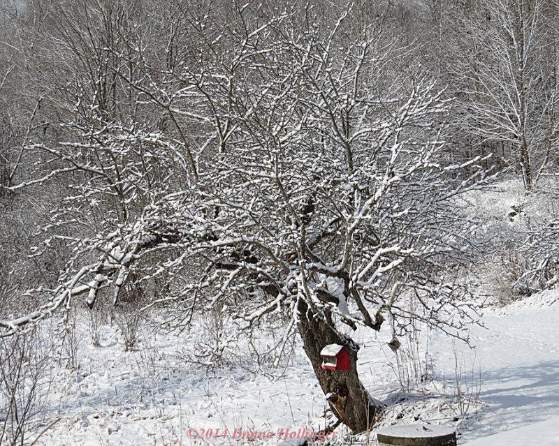 The Big Apple Tree