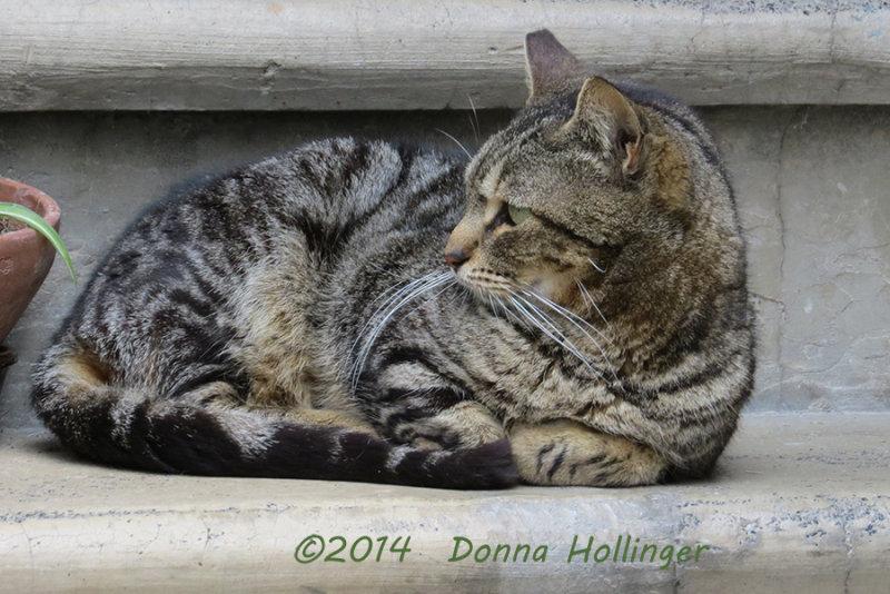 Kitty on the Doorstep
